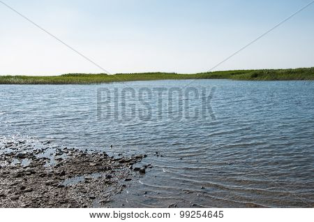 lake with cane