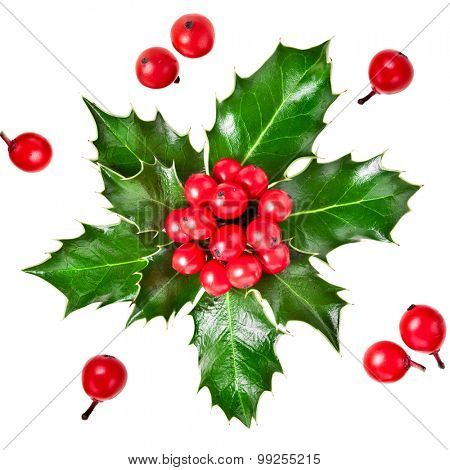 christmas holly iIlex with berries isolated on white background