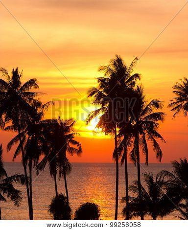 Palm Paradise Evening Scene