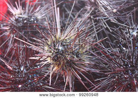 Sea urchin in Phu Quoc island, Vietnam