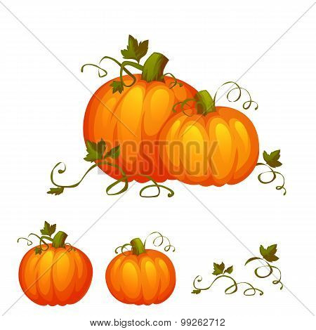 Fresh two pumpkin with sweet green leafs
