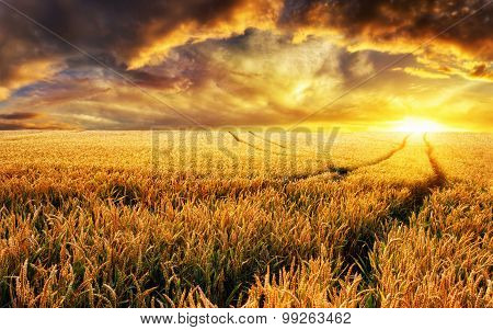 Sunset On A Field, Focus On Foreground Plants