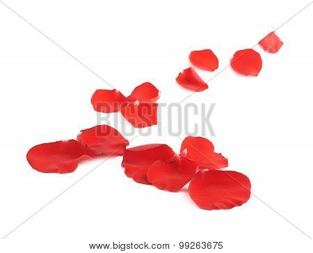 Red rose petals composition isolated