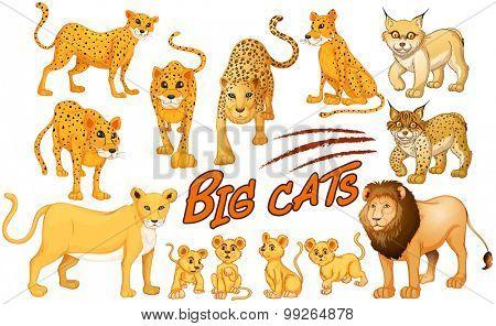 Different kind of lion and tiger illustration