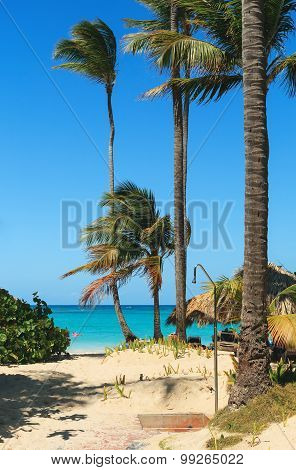 Vertical palm trees and a shower on the beach near the ocean