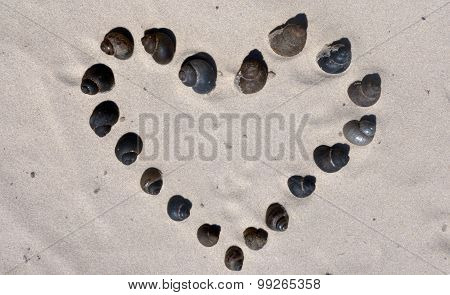 The Heart Of The Spiral Snail
