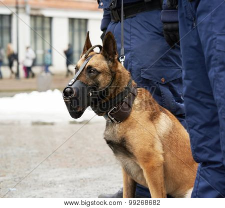 Border security dog composition