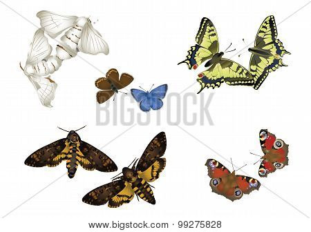 Butterfly couples