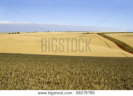 Yorkshire Wolds at Harvest Time