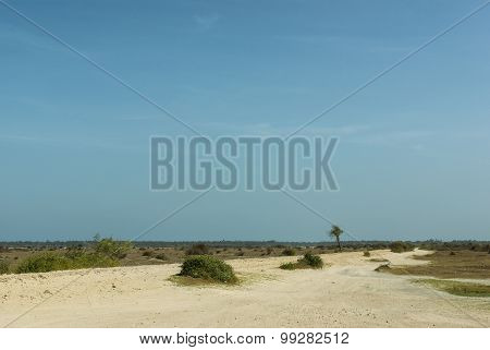 Dusty Road In A Dry Tropical Landscape