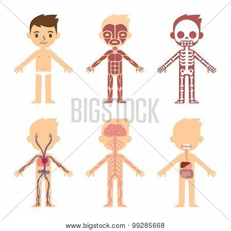 Anatomy Chart For Kids