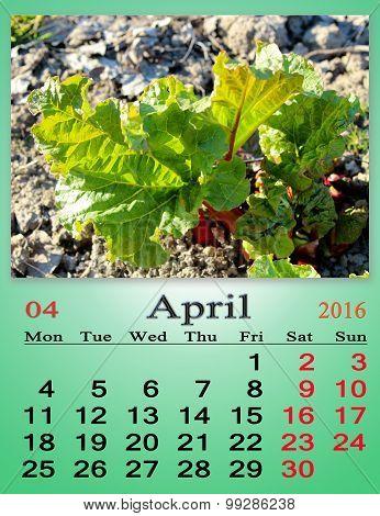 Calendar For March 2016 With Green Bush Of Rhubarb