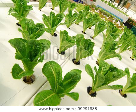 Hydroponic organic vegetable plots cultivation farm