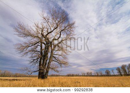 Bare Tree in Autumn