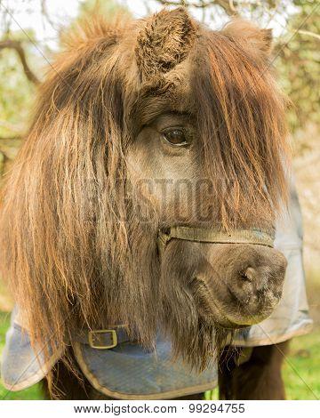 Portrait Of A Pony