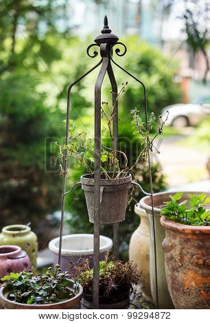Dry Flower In Pot On Metal Stand