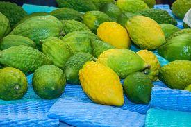 image of sukkoth  -  Funeral citron fruit  - JPG
