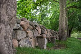 pic of old stone fence  - An old dry stone wall with old trees and a bench - JPG