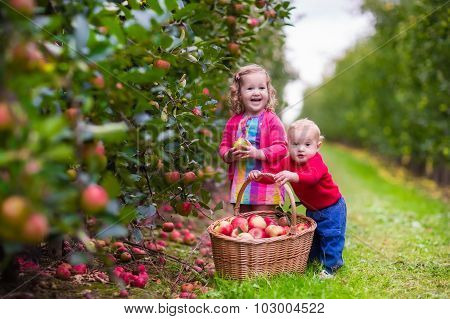 Kids Picking Fresh Apples From Tree