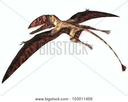Dimorphodon On White