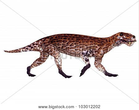Lycaenops Permian Dinosaur