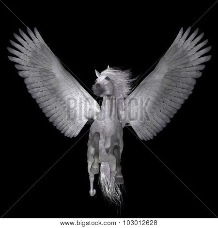 White Pegasus On Black