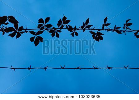 Outlines Of Barbed Wire With Ivy