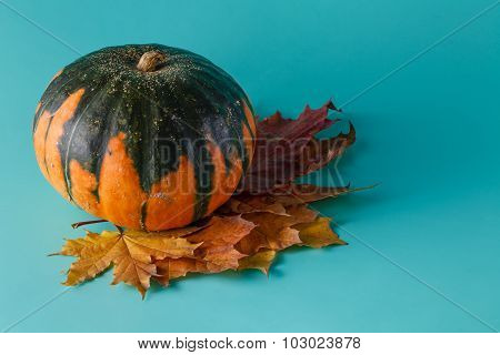Colored Pumpkin