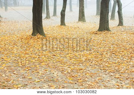 Autumn leaves in a foggy park