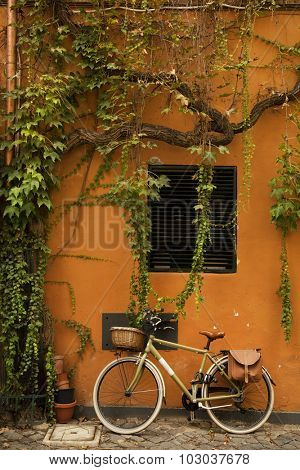 Bicycle on a orange wall with tree and green leaves