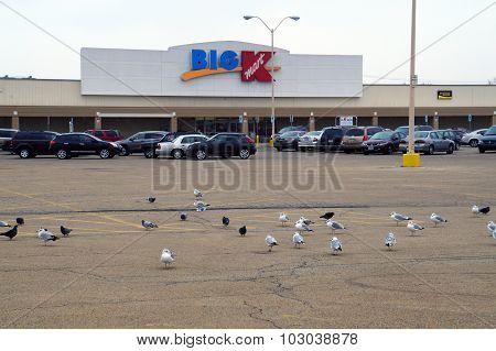 Gulls and Pigeons at Big K-Mart