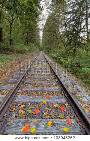 Railroad Track With Fall Foliage Vertical