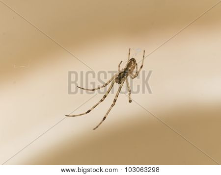 Small Spider Hangs Above Cupholder