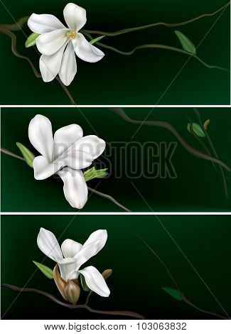 3 Banners With White Magnolia