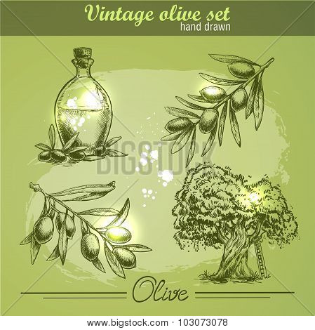 Vintage hand drawn set of olive branch tree and bottle