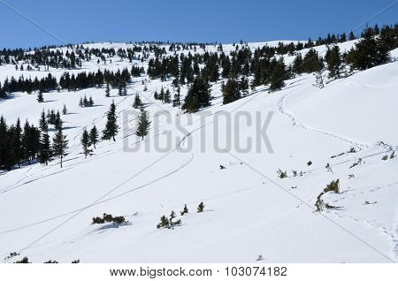 Off Piste Tracks In The Snow