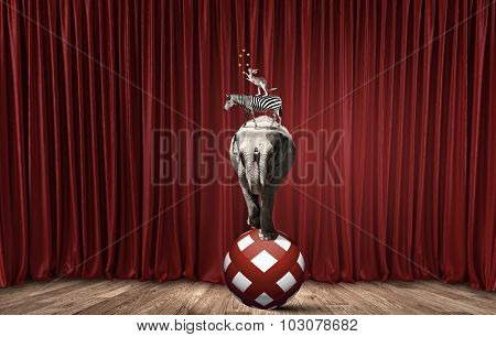 Circus animals standing in stack and balancing on rope