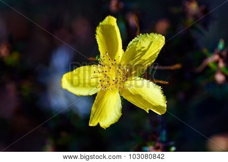 a yellow flower in a meadow