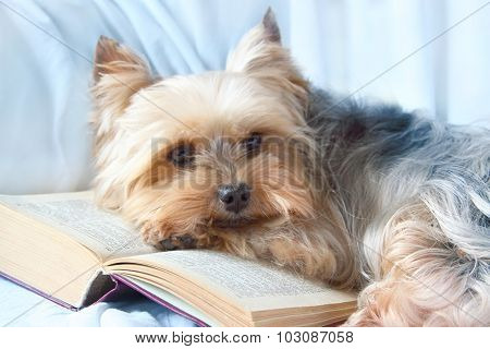Little Dog And Book.