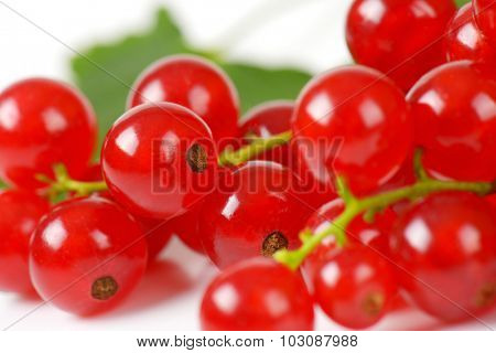 macro detail of fresh red currant