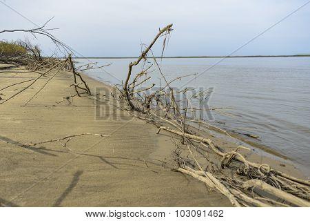 Sandy river bank .