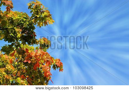 Autumn Tree..