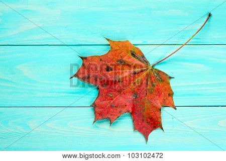 Red Autumn Leaf Over Blue Wooden Background
