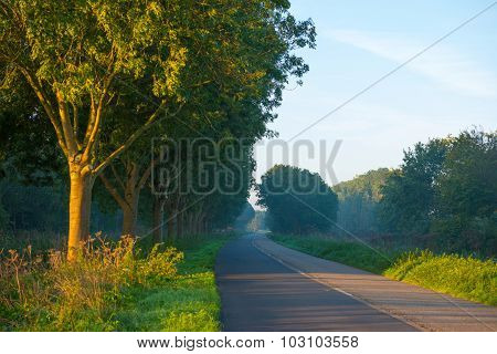 Trees along a road through a hazy landscape