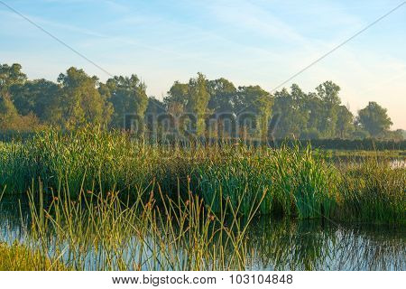 Shore of a lake below a blue hazy sky in autumn