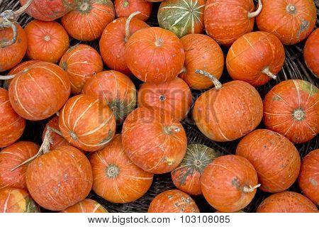 Organic Pumpkins