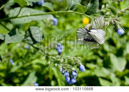 Blue Flower And White Butterflies On Green
