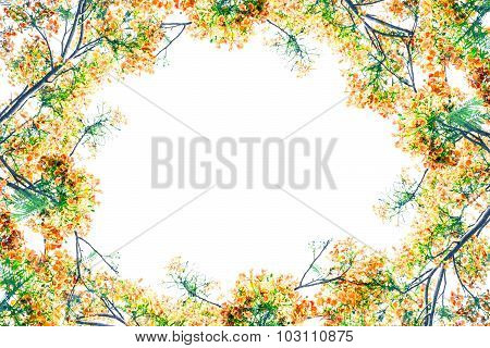 Flam-boyant Flower As Frame Border And Copy Space For Text Background