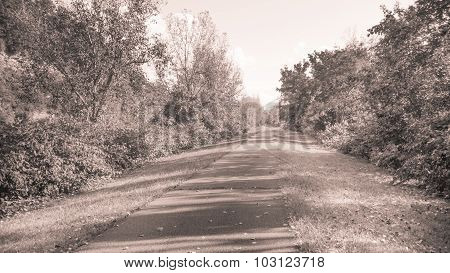 Sepia. Paved Trail with Watercress Plants and Trees.