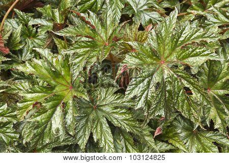 Decorative Plant Leaves Close Up
